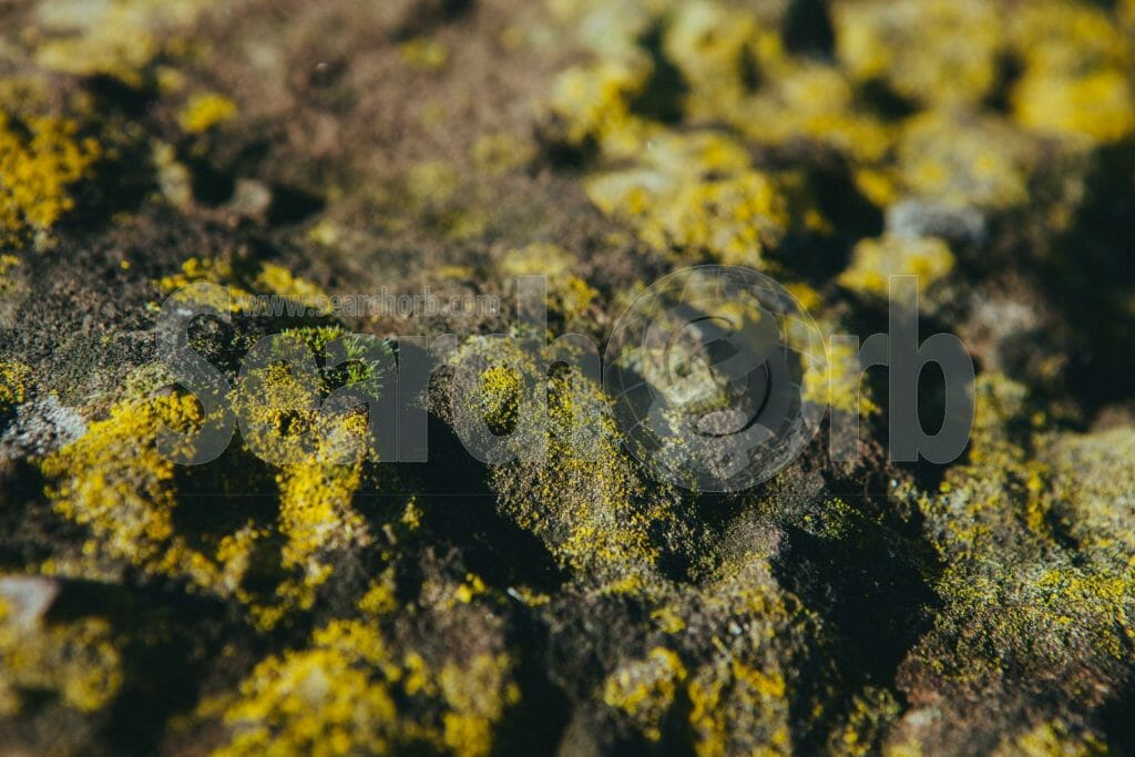 green lichen on rocks for searchorb marketing free image page